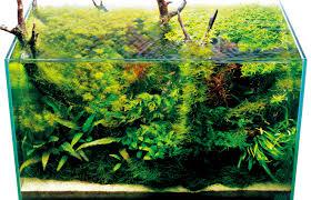 japanese aquascape seahorse aquariums now suppling ada in ireland seahorseaquariums