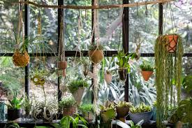 how to decorate using climbing and hanging plants architectural