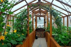 backyard greenhouse with potted plants best plants for