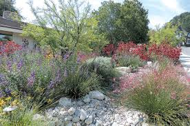 Southern California Botanical Gardens by Pacific Horticulture Society Lush Colorful And Water Wise An