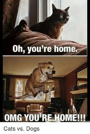 Oh You Dog Meme - oh you re home omg you re home comm cats vs dogs cats meme on