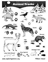 april pennsylvania animals tracks google search homeschool