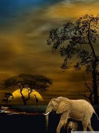 wallpaper of wildlife