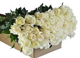 wholesale roses farm2door wholesale roses 100 stems of stemmed