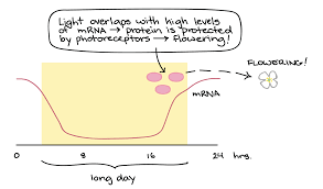 How To Light by Phototropism U0026 Photoperiodism Article Khan Academy