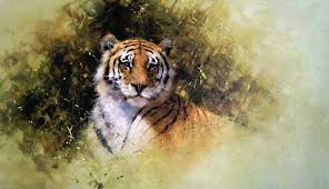 studio prints limited working sketch of a tiger david shepherd