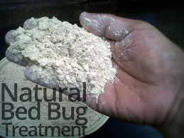 Kill Bed Bugs Best 25 Bed Bugs Treatment Ideas On Pinterest Bed Bug Control