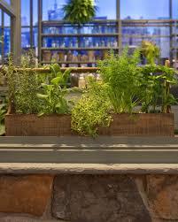Countertop Herb Garden by Container Herb Garden U0026 Video Martha Stewart