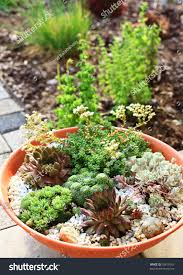 Succulent Rock Garden by Beautiful Rock Garden Cultivated Small Basin Stock Photo 58819165