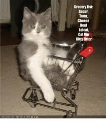Lol Cat Meme - ican hascheezeurgercom grocery list sugar tuna cheese beef lolcat