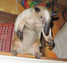 Anteater Meme Generator - fight me irl do you even lift anteater meme generator 100 images