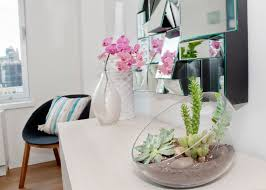 decorations beautiful small plants cactus and succulents to