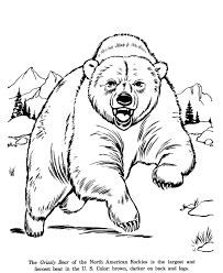 animal drawings coloring pages grizzly bear animal