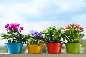 potted flowers flowers color buckets potted flowers wallpapers 2048x1360