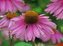southeastern native plant nursery top 10 native plants for your michigan garden