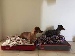 best chew proof dog beds reviewed dog bed zone