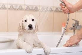bagno per cani come creare profumo per cani fatto in casa i miei animali