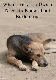 dog euthanasia every pet owner needs to about dog euthanasia