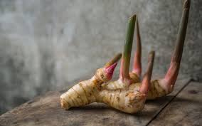 galangal cuisine ingredient spotlight galangal the you need in your