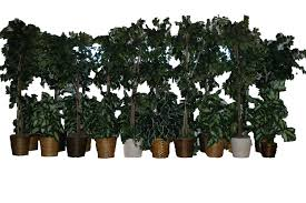 ralston supply center decorative trees and plants