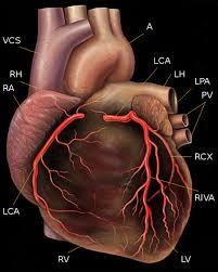 resume professional writers rpw reviews of bioidentical pellet jeffrey dach md bioidentical hormone estrogen prevents heart disease