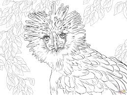 endangered animals coloring pages free printable pictures
