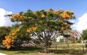 flowering trees in central florida pictures reference