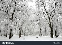 trees snow winter park stock photo 116243887