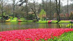 Largest Flower In The World Flowers In The Park Keukenhof Keukenhof Is The World U0027s Largest