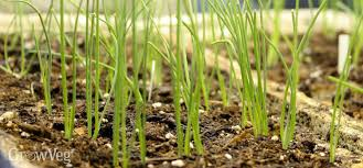 the perfect time to plant out seedlings and young plants