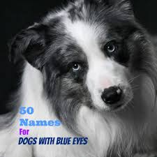 Exotic Color Names by 50 Unique Names For Dogs With Blue Eyes Pethelpful