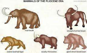 pliocene visual dictionary