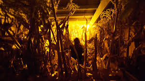 halloween 2015 haunted houses corn mazes in northern utah