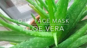d i y aloe vera face mask youtube
