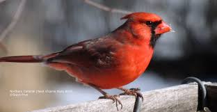 West Virginia birds images West virginia wild birds wild bird feeding watching wv jpg