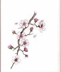drawn sakura blossom rose tree pencil and in color drawn sakura