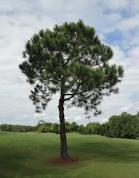 file tree at golf course jpg wikimedia commons