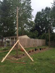 my 12 plant trellis home brew forums