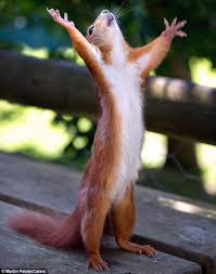 Dramatic Squirrel Meme - preaching to the park squirrel captured in divine pose as he