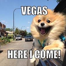Memes De Las Vegas - 20 funny pictures captioned with animal thoughts picture captions