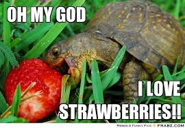 Turtle Memes - butterfly turtle meme google search great memes for feminists