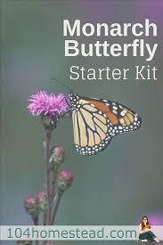 monarch butterfly garden starter kit