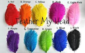 ostrich feathers ostrich feathers 6