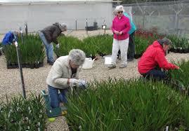 australian native plants victoria growing friends u2013 cfrbgv inc