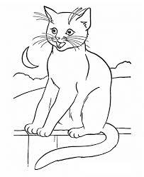 black cat coloring coloring