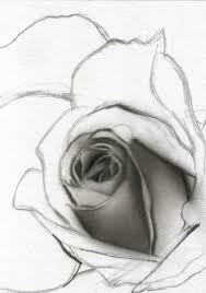 pencil sketch of rose flower drawing flowers how to draw a rose
