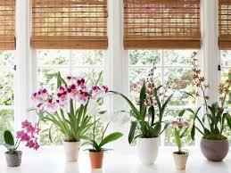 browse indoor gardens gardenista