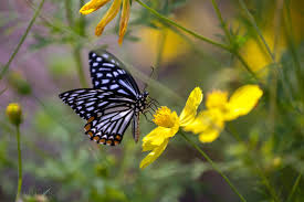brett cole photography a butterfly on flowers at the kolkata