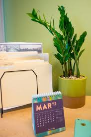 Desk Plant 575 Best Office Plants U0026 Desk Mates Images On Pinterest Office