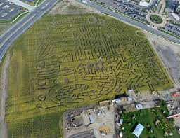 thanksgiving point corn maze pays tribute to wizard of oz the